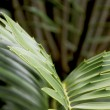 Stock Photo: Abstract Closeup of Green and Yellow Leaf of Cycad Plant
