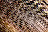 Close Up Patterns And Textures of Palm Frond — Stock Photo