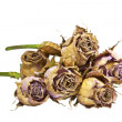Bunch of Dying Mauve Roses with Green Stems — Stock Photo #47207565