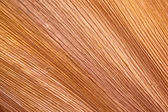 Striated Textures on Base of Palm Frond — Stock Photo