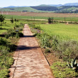 Paved Pathway Leading to Metal Sculpture of Nelson Mandela — Stock Photo #49950843
