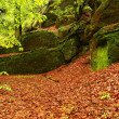 Sandstone blocks under beeches and another trees at mountain river covered by fresh moss and fern. Fresh spring air in the evening after rainy day. Old orange beech leaves on ground. — Stock Photo