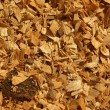 Sawdust of dry red beech with pieces of dry brown bark. Texture with detail pieces.  — Stock Photo