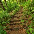 Stony steps in forest, tourist footpath. — Stock Photo