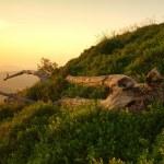 Сухие стебли травы как силуэт в вечере солнечных лучей. Ствол Мертвое дерево торчит из травы. Оранжевый цвет неба в фоновом режиме — Стоковое фото