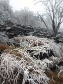 Early cold and misty morning at old hoarfrost beech forest on the mountain, view over frozen grass and boulders to trees and hill. — Stock Photo