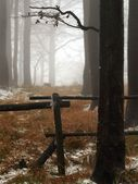 Early misty morning in deep beech forest, hoarfrost on trees and trunks, frozen grass. — Stock Photo