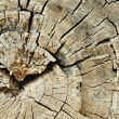 Detail of dry cutted trunk pulled out from the see. Cracked annual rings of dry trunk. — Stock Photo