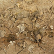 Dry ground of cracked clay  — Stock Photo