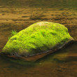 Mossy boulder in the river under trees at mountain river. Fresh spring air in the evening after rainy day, deep green color of fern and moss — Stock Photo