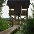 High wooden stand with seats for hunters and wildlife photographers at lake bank. Brown roof, wooden foofbridge between reeds over grassed water. — Stock Photo
