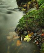 Colorful leaves, autumn colors in mountain stream. Clear water blurred by long exposure. — Stock Photo
