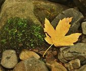 Colorful leaves of maple tree on brown gravel of river bank. Autumn colors. — Stock Photo