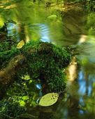 Cascade on small mountain stream, water is running over rocks and between mossy roots. — Stock Photo