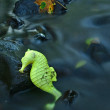 Basalt stones in water of mountain river with abandoned plastic yellow toy of seahorse, colorful maple leaf on basalt boulder in background. — Stock Photo