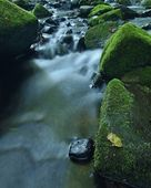 Aspen leaf on mossy exposed basalt boulder in blurred clear water of mountain river, first autumn colors. — Stock Photo