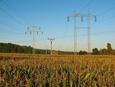 High and small old electric poles in middle of corn field. — Stock Photo