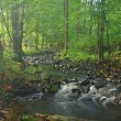 Mountain stream in fresh green leaves forest after rainy day. First autumn colors in evening sun rays.The end of summer at mountain river. — Stock Photo