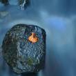 Colorful leaf from aspen tree on basalt boulder in blurred mountain rapid stream. Blue blurred waves, milky smoky water with reflections. — Stock Photo