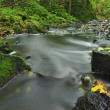 River bank under trees at mountain river with blurred waves. Fresh air in the evening after rainy day, deep green color of mossy boulders covered by maple leaves. — Stock Photo