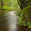 View into deep sandstone gulch with clear water of mountain river. Clear blurred water with reflections. Valley covered beeches and maple trees with first colorful leaves, fresh green fern. — Stock Photo #31388341