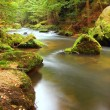 View into deep sandstone gulch with clear water of mountain river. Clear blurred water with reflections. Valley covered beeches and maple trees with first colorful leaves, fresh green fern. — Stock Photo #31391203