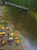 Basalt stones in clear water of mountain river, colorful leaves from aspen and maples. Blurred waves, reflections in water level. — Stock Photo