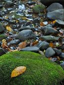 Wet basalt stones in blurred water of mountain river with yellow and orange aspen autumn leaf. — Stock Photo