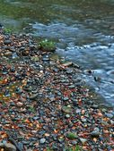 Gravel in clear water of mountain river, colorful leaves from aspen and maples. Blurred waves, reflections in water level. — Stock Photo
