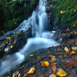 Small waterfall full of water after rain. Colorful leaves from maple tree and wild cherry laying on wet basalt rock. Stones and colorful autumn leaves — Stock Photo #32024569