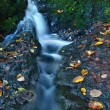 Small waterfall full of water after rain. Colorful leaves from maple tree and wild cherry laying on wet basalt rock. Stones and colorful autumn leaves — Stock Photo #32024637