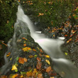 Small waterfall full of water after rain. Colorful leaves from maple tree and wild cherry laying on wet basalt rock. Stones and colorful autumn leaves  — Stock Photo