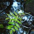 Green leaves of ash tree, autumn colors in mountain stream. Clear water blurred by long exposure. — Stock Photo