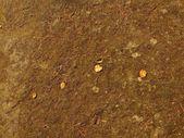 Folha de vidoeiro amarelo velho em musgo seco. — Fotografia Stock
