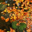 Orange beech leaves in water and on mossy stone. Autumn colors. — Stock Photo