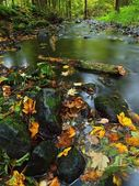 Mountain river with low level of water, gravel with colorful beech, aspen and maple leaves. Fresh green mossy stones and boulders on river bank after rainy day. — Stock Photo