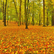 Autumn park with leaves trees, colorful leaves of aspen, maple and chestnut covered ground. — Stock Photo