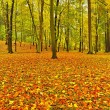 Autumn park with leaves trees, colorful leaves of aspen, maple and chestnut covered ground. — Stock Photo #33229773