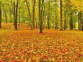 Podzimní park s listy stromů, barevné listí aspen, javor a kaštany které zem. — Stock fotografie