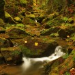 View into deep valley of mountain river with low level of water, gravel with colorful beech, aspen and maple leaves. Fresh green mossy stones and boulders on river bank after rainy day. — Stock Photo