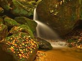 Small waterfall full of water after rain. Colorful leaves from maple tree, wild cherry and birch laying on wet sandstone boulders. Mossy stones and colorful autumn leaves — Stock Photo