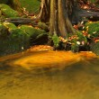 Whirlpool with colorful autumn leaves on water level at stream bank. Colorful leaves from maple or aspen tree on mossy stones and into water. — Stock Photo
