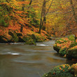 Autumn mountain river with low level of water, fresh green mossy stones and boulders on river bank covered with colorful leaves from maples, beeches or aspens tree, reflections on wet leaves.  — Stock Photo