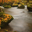 Autumn mountain river with low level of water, fresh green mossy stones and boulders on river bank covered with colorful leaves from maples, beeches or aspens tree, reflections on wet leaves. — Foto Stock
