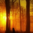 Stock Photo: The autumn sunrise in beech forest. Fog between naked beech trees without leaves.