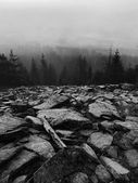 Hills increased from early morning autumn foggy background. Black and White photo. — Stock Photo