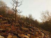 Forest Hill'de sabah erken sonbahar sisli arka plandan arttı. — Stok fotoğraf
