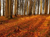 Forest on hill increased from early morning autumn foggy background. — Stock Photo