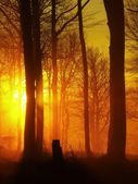 The autumn sunrise in beech forest. Fog between naked beech trees without leaves. — Stock Photo