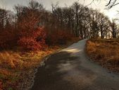 First sun rays. Orange dry leaves and stalks of grass at the frozen asphalt footpath. — Stock Photo